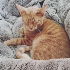 cat-1786477_640