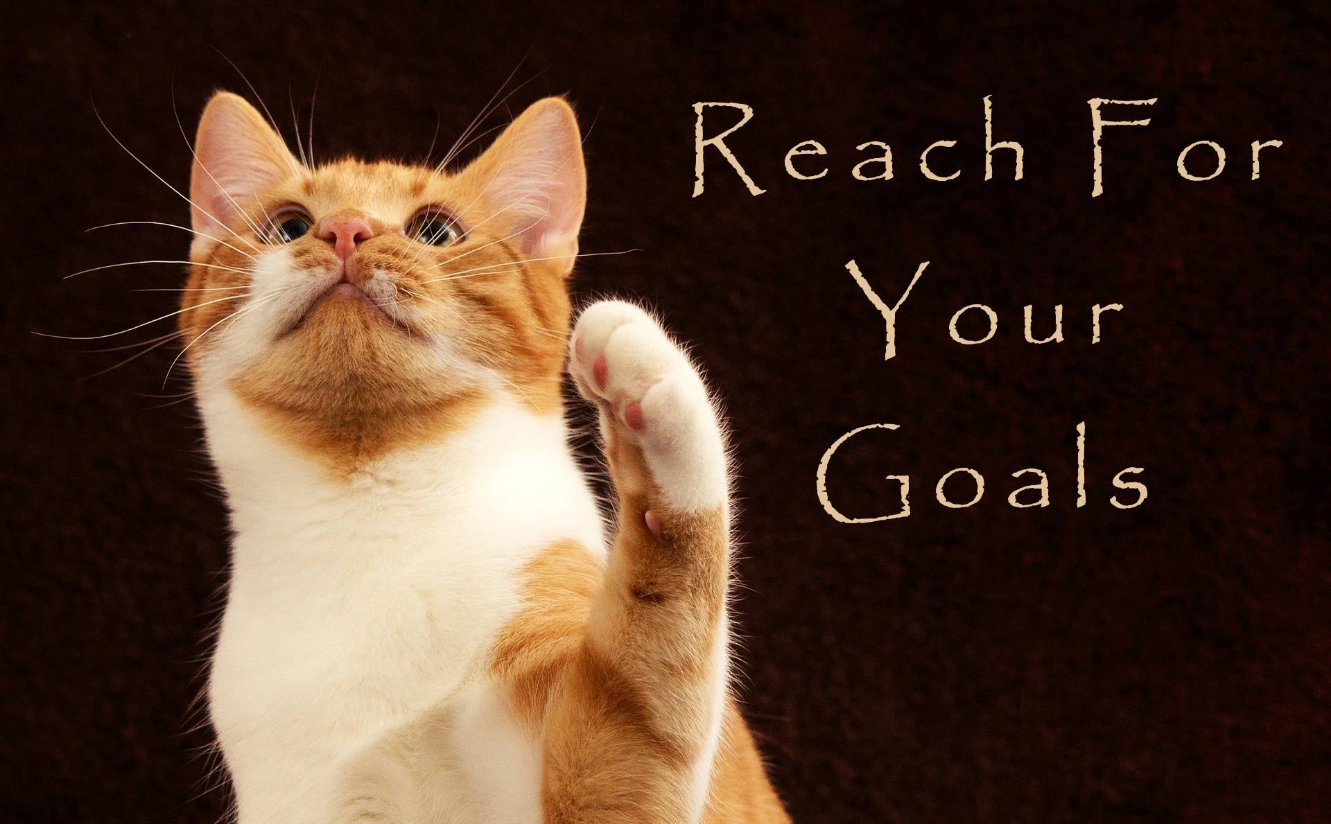 cat reach for your goals